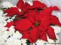 02dec2011cpycchristmas002