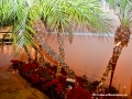 05DEC2014CocoplumHoliday_039